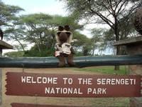 Highlight for album: Serengeti, Tanzania Vacation