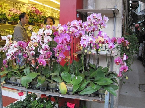 Hong Kong- Fabulous orchids at the flower market.