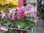 Hong Kong- Fabulous orchids at the flower market.