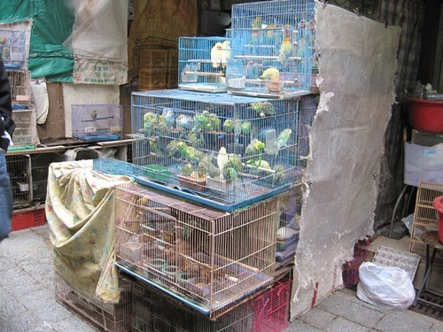 Hong Kong- There were SO many birds chirping and squawking at the bird market!